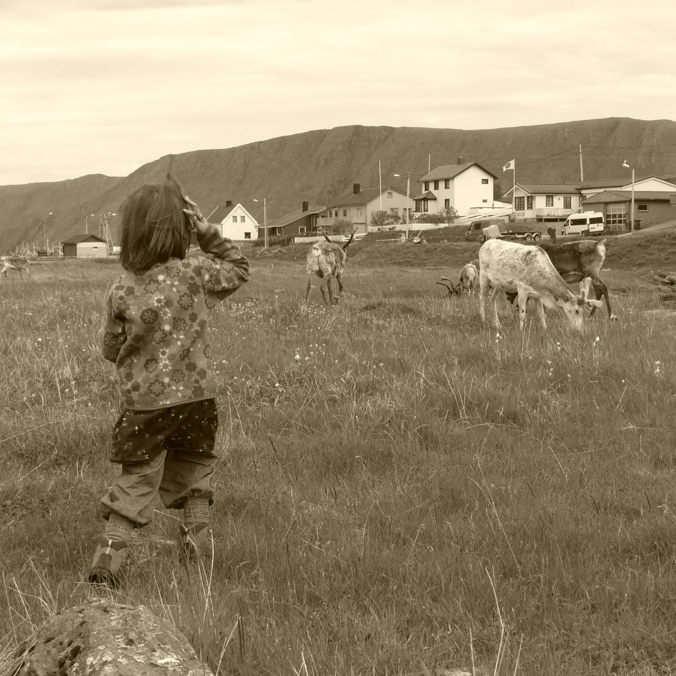 My 4.5-year-old daughter is fascinated by a herd of reindeer near the North Cape.
